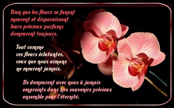 deces-fleur-3cd959