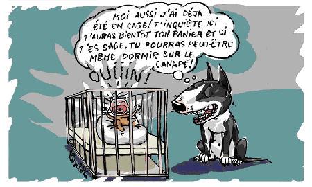 enfant-chien-3