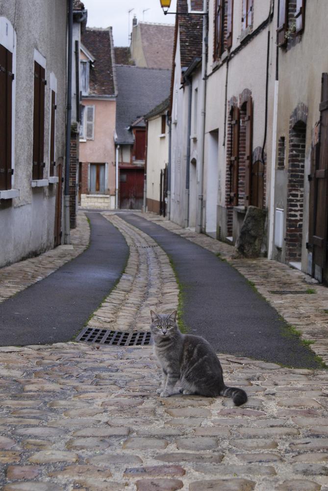 chat-des-rues-67959ca2-f77c-4951-9591-504ab88acfdf