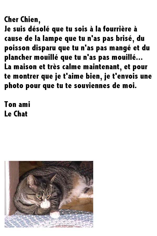 chat-et-chien-2007043103-O
