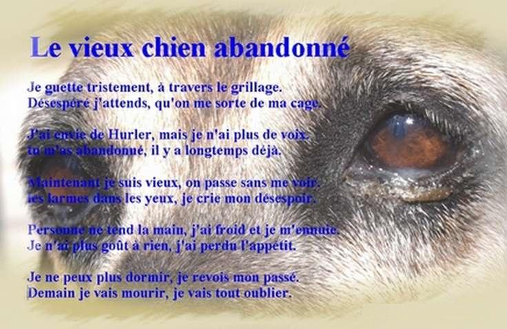 poème d'un vieux chien