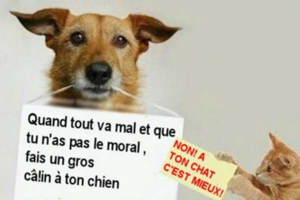 Calins-chien-chat